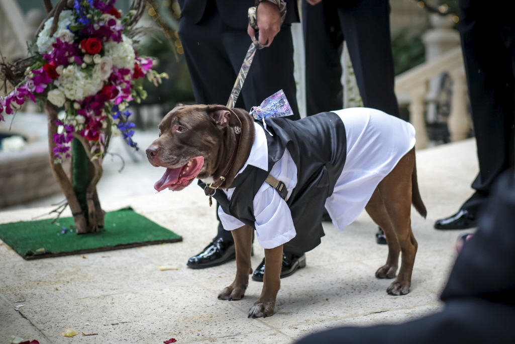 Your dog in your ceremony